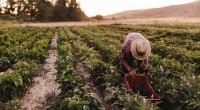 Ci uniamo alla preoccupazione delle associazioni ambientaliste ed agroalimentari per i decreti sulle New Breeding Techniques, in vista del voto del 13 gennaio in Commissione Agricoltura della Camera. L'approvazione dei […]